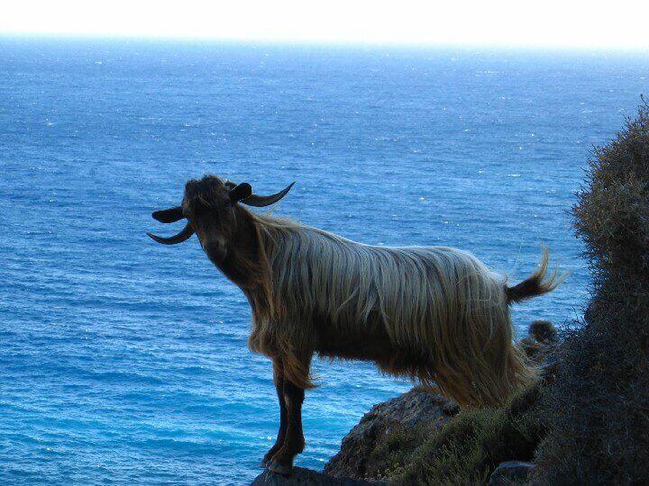 Crete Creta