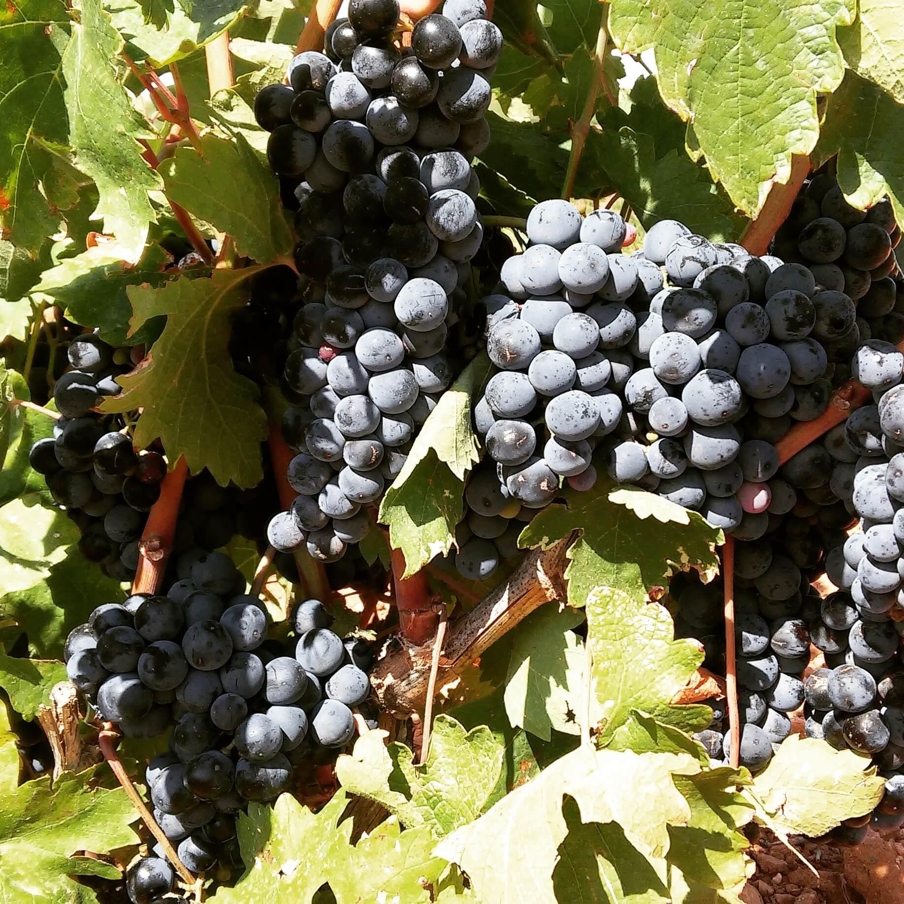 La Mancha, el mayor viñedo del mundo