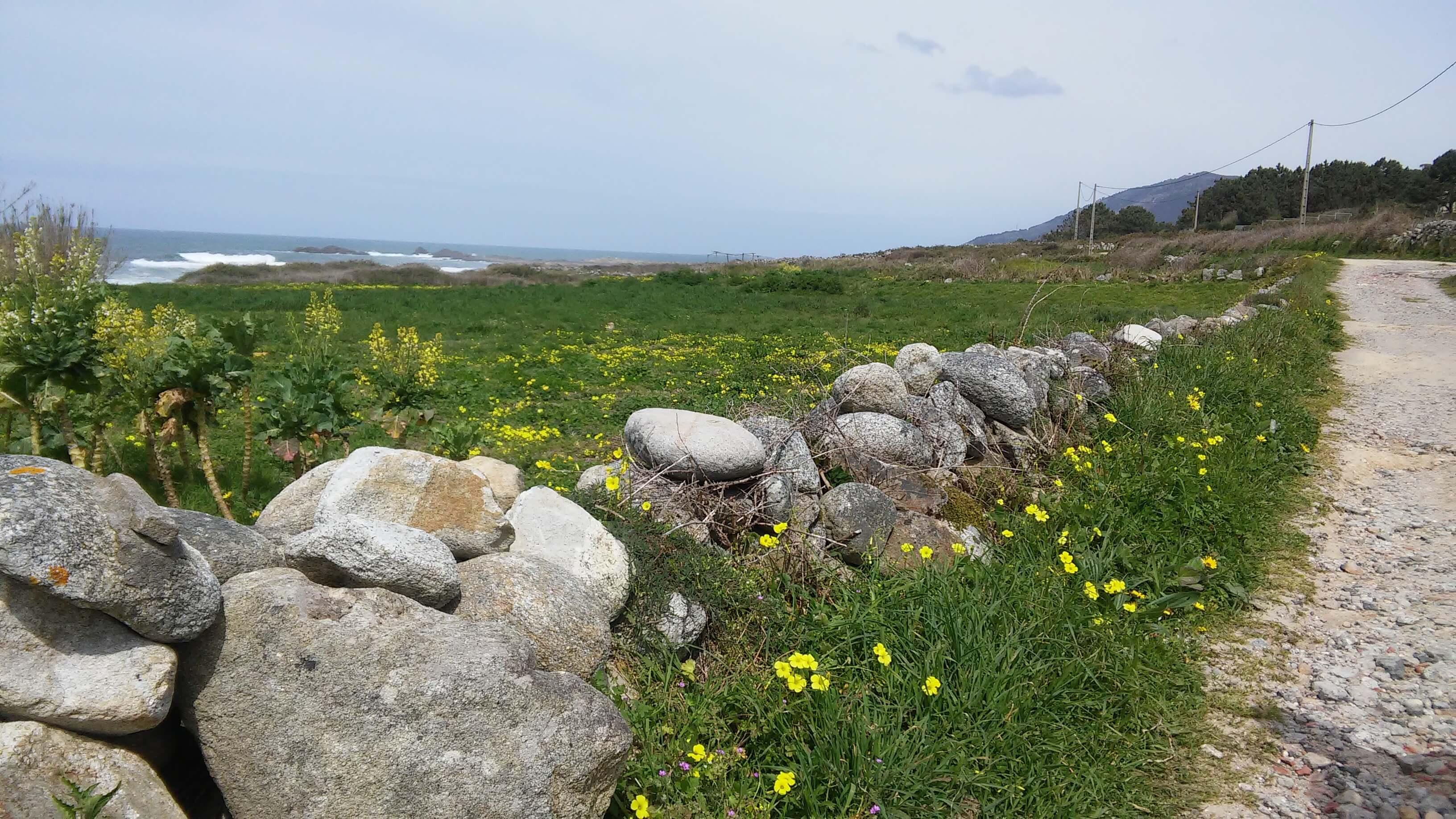 portuguese coastal way